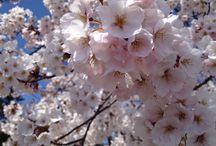 2014年の桜 / 2014年の桜の風景