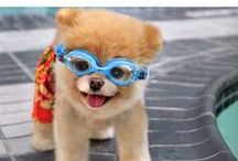 Funny, Sweet and Cute