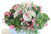 Seasons | Spring! / DIY crafts, food, decor and celebration of spring