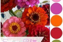CDJ | Color Palettes