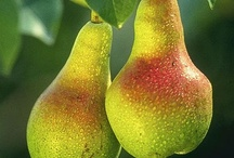 Pears / by Living In Serendipity