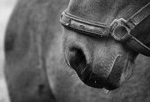 heidi + horses. / by Alyssa Krahn