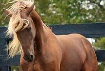 Horses / by ⭐️Nena⭐️ ⭐️Arena⭐️