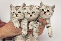 Foranima Furry Friends #FFF / The cutest animal pictures on Pinterest.  / by Foranima.com