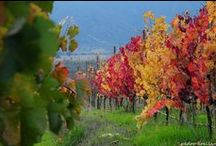 Colchagua Valley Chile / Colchagua Valley is in Central Chile and is home to some of the world's premier wines.