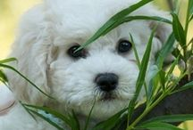 PUPPIES ~ DOGS / by Pat Roberge 🌻