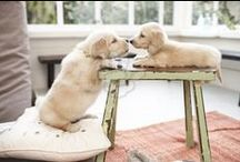 Adorable Dog Pictures  / by Karen Johnson