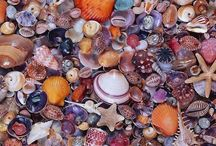 Stones & Shells / Rocks, minerals & Shells