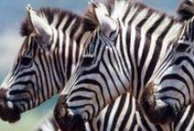 Les merveilles de la Tanzanie