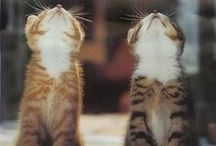 Felines / Kitties.