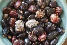 Seeds of all Types / Seeds differ greatly in shape, texture and color. What will you find in your seed packets this year?