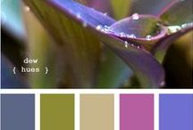 Color Palette / Color schemes