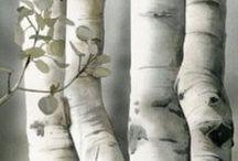 Gardens & Trees / by Nikko Sa