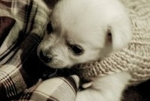 Dog crafts / Things to make to keep your fur baby warm