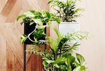 Greenery Indoors | Indoor plants & Inspiration / Going green indoors : Inspiration and ideas for inside the home