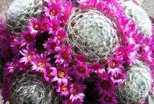 Cactus / Cactus non amour!