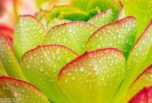 Landscape Flowers / Fiori in primo piano - photo by Bob Stronck