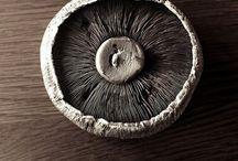 Photo | Fungis