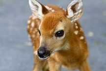 Baby Animals / Baby animals / by Anthony Riccardo