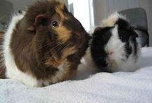 Lovely Animal / 可愛い動物達の拾いもの画像等