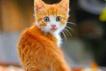 More on kittens