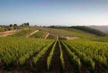 Vini Siciliani Riserva / VINI SICILIANI