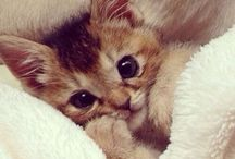 What I want so so desperately / All about the cutest little kittens
