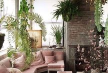 It's all about plants / Plants to cheer up your interior or exterior