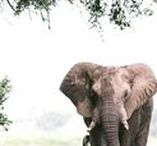 Destination: Zimbabwe / Travel guides and itineraries for travel in Zimbabwe
