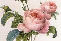 ART : Botanique and Birds; and natural history drawings / A board of Birds, Bugs, Butterflies and Botanicals   ****  I love botanical art .. it is a precision art .. the detail and form are so exacting ..  / by Francesca