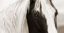 A Horse of a Different Color / We love horses!  All shapes, sizes, colors and breeds!