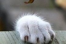 Paws right here / mainly cats
