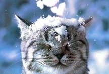 Cats / by Bonnie Cavanaugh