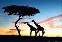 Lugares / Lugares mágicos, destinos inolvidables, viajes maravillosos... #NQF #VIAJAR #LUGARES