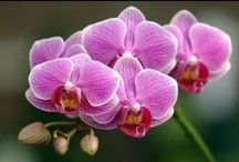Beautiful Flowers and Orchids
