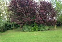 Parco delle noci / 4000 mq di verde via scardona 1957 1 e 2 giugno aperto anche ai non soci i rimanenti giorni dell'anno per soci aics