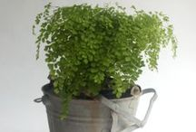 Pot Plants / Stunning, innovative ways to display plants