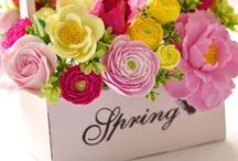 Season -Spring