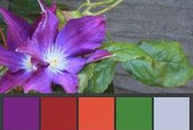 Striking Natural Color Palettes / Some of the most gorgeous, surprisingly lively color palettes are taken from nature.  Enjoy these color palettes I created from my own nature photographs. (And I'd love to hear about any designs these helped you with!)