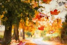 autumn blues / Autumn colors, autumn inspirations, autumn photos, autumn landscape, autumn photos