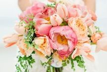 Miss Taylor / Coral wedding
