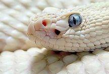 Snakes / Slytherin inside.