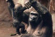 Animal parents / My heart melts!