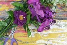 Cutting Garden / Cut flower garden