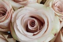 Miss ... / Wedding Flowers Pink and Sivers