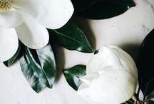 flower / by Dana