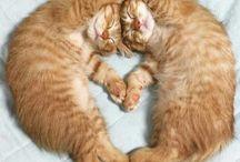 Kitz & Catz