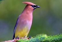 I love birds / All sorts of birds. / by Sharon Jorgensen