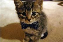 :::  Cats / Katzen :::