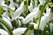 Niedługo wiosna!